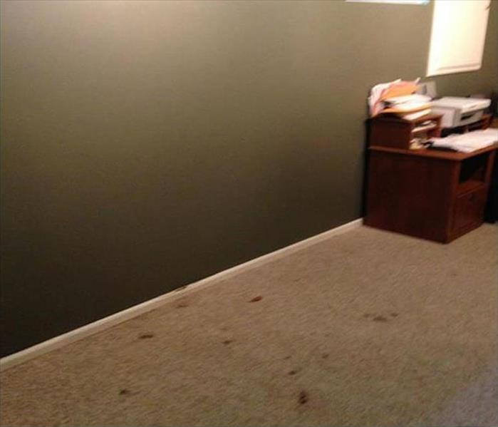 Sneaky Mold Growth in a Dallas Home Office Before