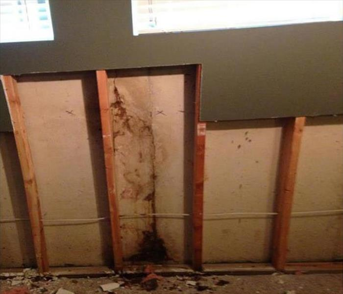 Sneaky Mold Growth in a Dallas Home Office After