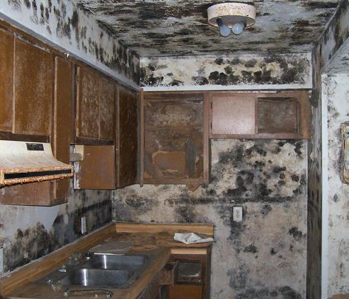 Mold Invasion in Dallas
