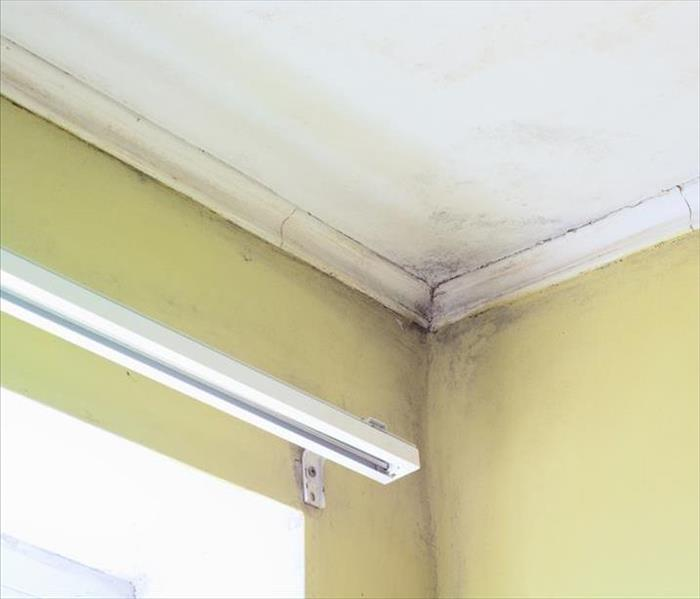 Wills Point Mold Growth