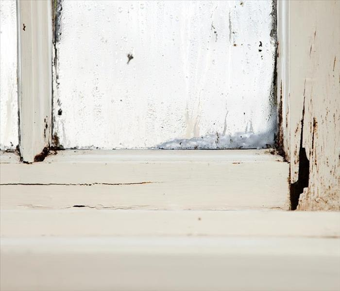 Mold Remediation Get Mold Damage in the Basement of Your Dallas Area Home Under Control, Today