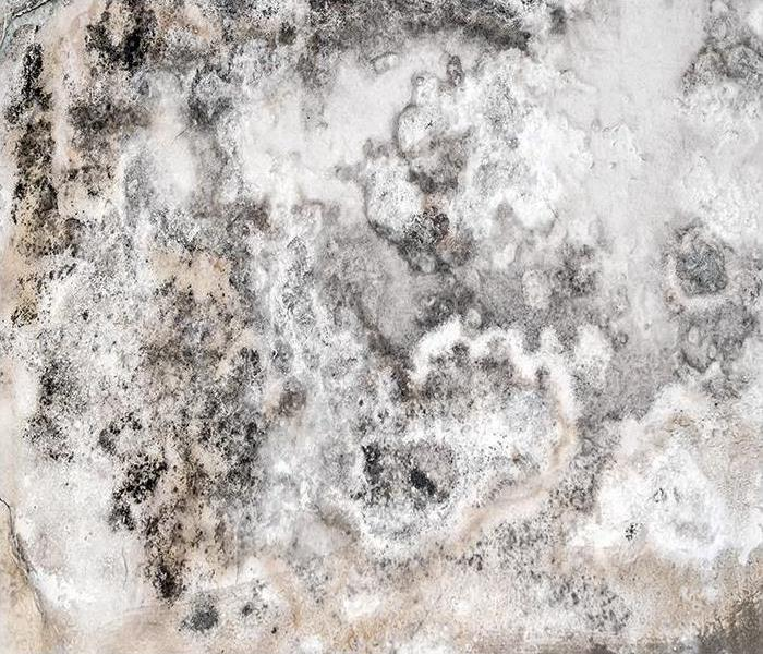 Mold Remediation If You Think A Mold Infestation Has Taken Over Your Dallas Home, Our Team Is Here To Help!
