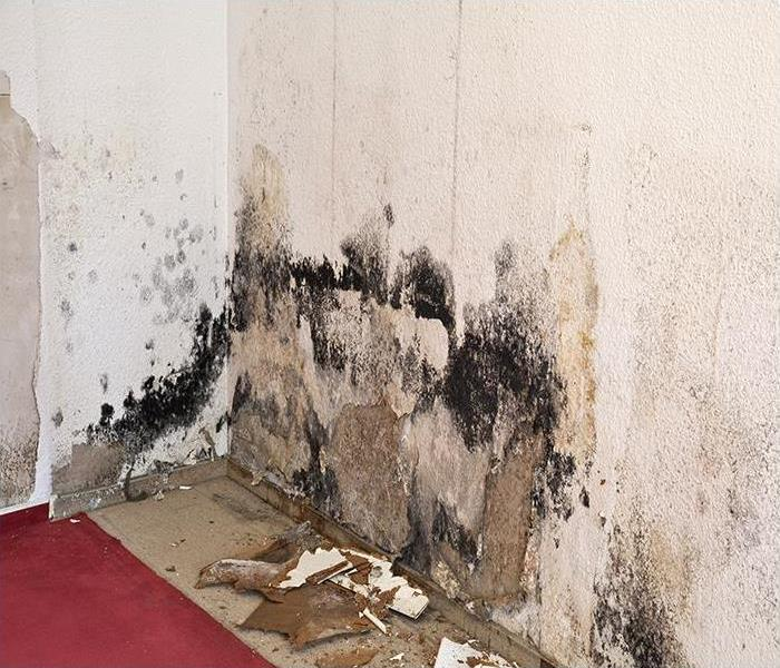 Mold Remediation Do Not Put Off Mold Remediation For Your Dallas Residence