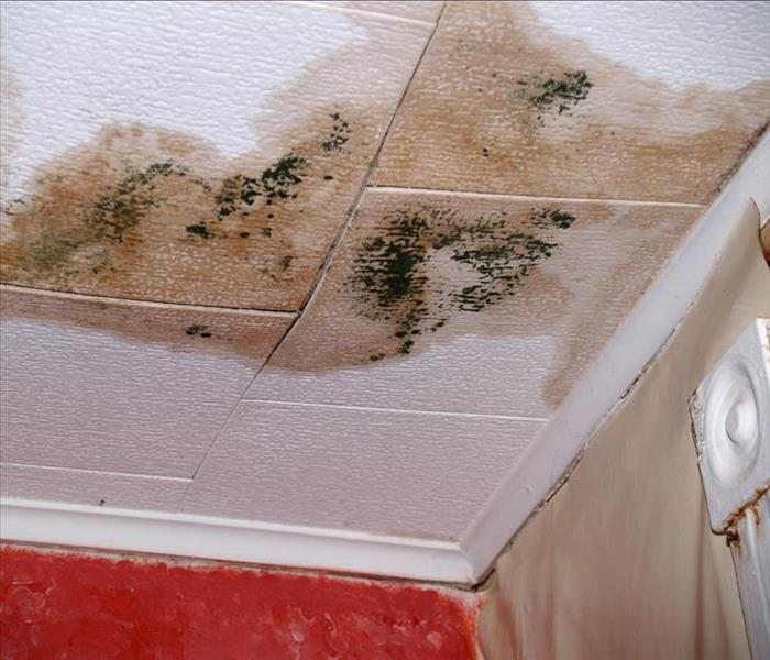 Mold Remediation Mold Damage Remediators
