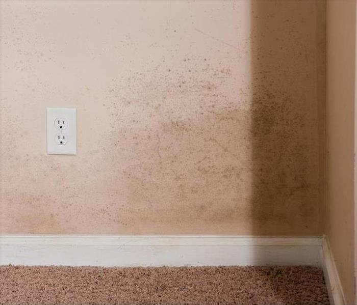 Mold Remediation Any Season is Mold Season in Dallas
