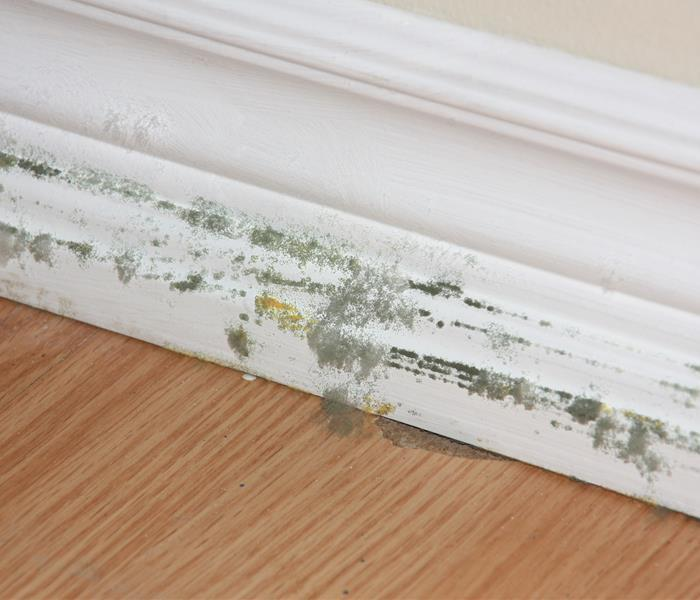 Mold Remediation Remediating Mold Damage in Dallas