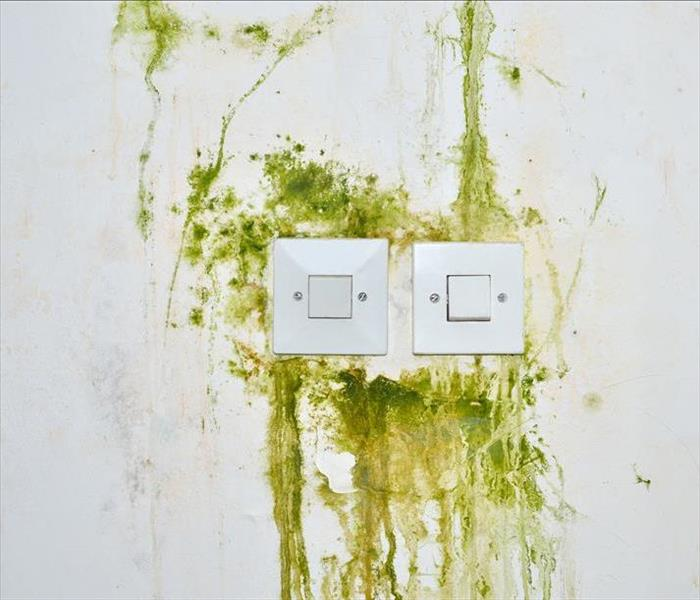 Mold Remediation Properties Can Harbor Mold Needing Treatment