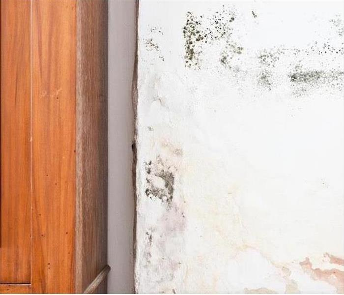 Why SERVPRO Decreasing Your Home's Risk of Developing Mold Damage in Dallas