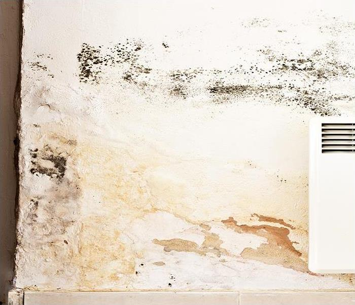Mold Remediation Prevent Mold Damage From Developing In Your Dallas Area Home Today