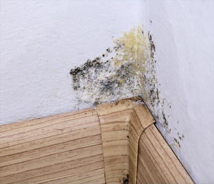Mold Remediation Taking Care of Mold Damage in Dallas Basements